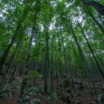 Bohinj forests, Photo by: Alan Kosmac